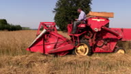 Farm worker harvest wheat plants with small combine harvester video