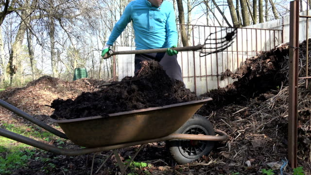 Farm worker with pitchfork dig compost and carry full barrow. video