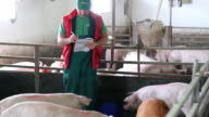 Farmer And Pigs video