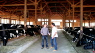 Farmer and Veterinarian at Dairy Farm video