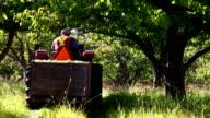 Farmer Apple Orchard video