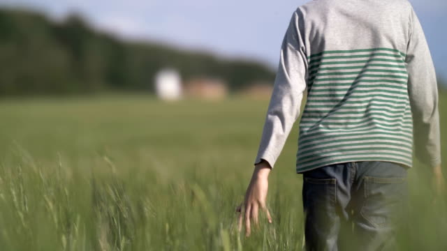 farmer boy running a wheat field, holds a hand on wheat, slow motion video