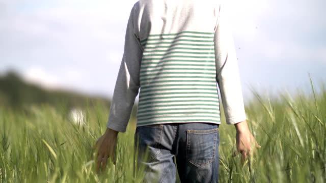 farmer boy walks along a wheat field, holds a hand on wheat video