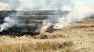 Farmer burning dry straw in rice paddy video