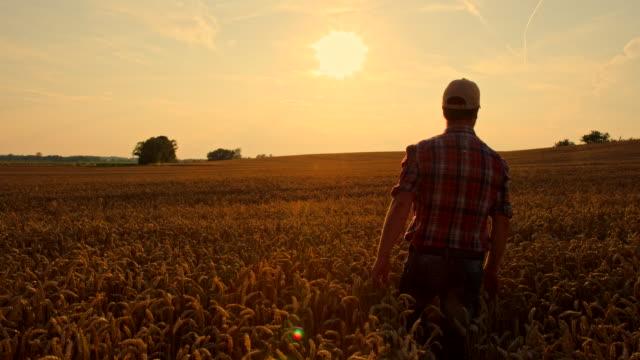 WS CS Farmer Caressing The Wheat video