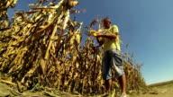 Farmer Checking his Cornfield video
