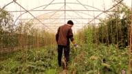 Farmer checking his greenhouse plants video