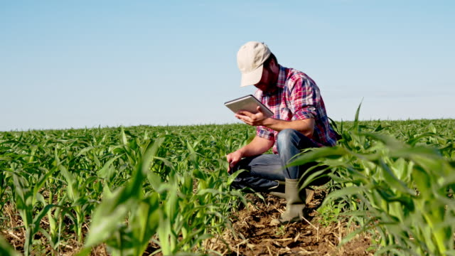 LS DS Farmer Checking Plants With A Digital Tablet video