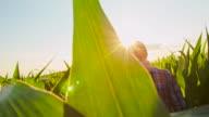 MS TS Farmer Checking The Corn video