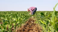 WS DS Farmer Checking The Corn video