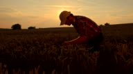 WS CS Farmer Checking The Wheat video
