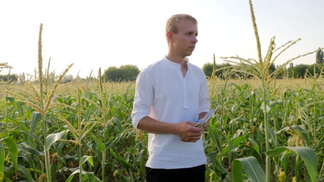 Farmer Checks the Ripening Corn video