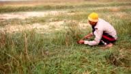 Farmer cutting grass video