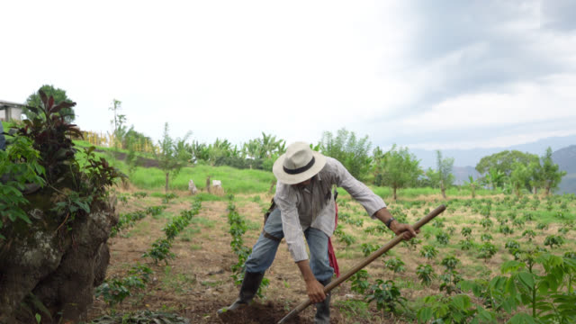 Farmer digging a hole with a shovel to plant coffee video
