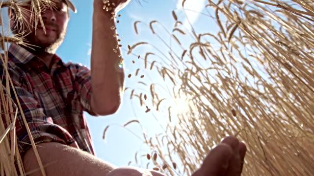 MS LA Farmer Dropping Wheat Grains video
