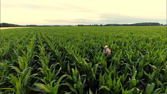 AERIAL Farmer Examining The Plants video