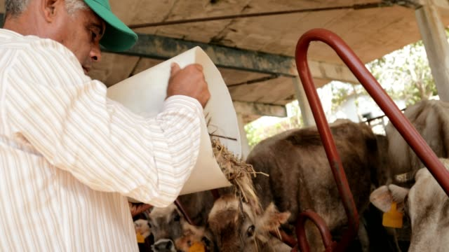 Farmer Feeding Animals Peasant Man At Work In Farm video
