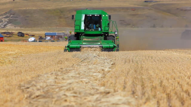 Farmer harvesting wheat field with combine harvester video