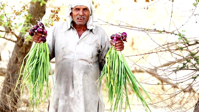 Farmer holding onion crop video