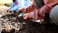 Farmer implant garlic video