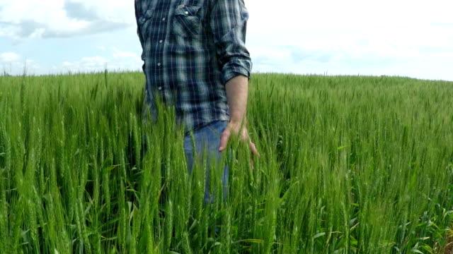 Farmer in a Wheat Field video