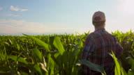 WS CS Farmer In The Field Of Corn video