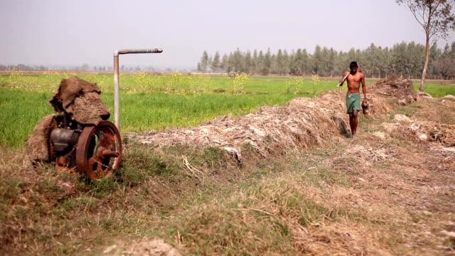 Farmer in the field of wheat video