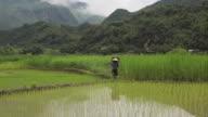 Farmer man carrying harvest basket in rice fields of Sapa Mai Chau Vietnam video