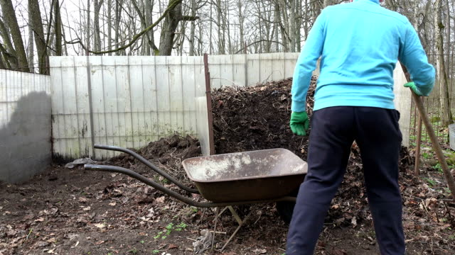 farmer man with fork load rotten compost humus to barrow. FullHD video