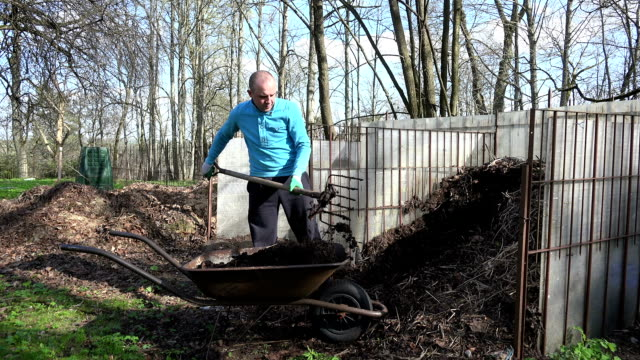 Farmer man with pitchfork dig compost humus to barrow. video