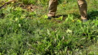 Farmer mows the grass on his stead. video