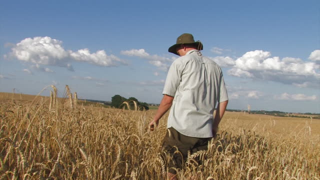 farmer on ripe wheat field video