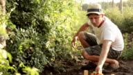 Farmer picking a cherry tomatoes on organic farm video