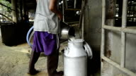 farmer pooring fresh white milk on aluminum can tank video