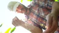 SLO MO Farmer Pouring Corn Crop video