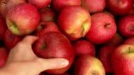 Farmer puts apples in cart. video