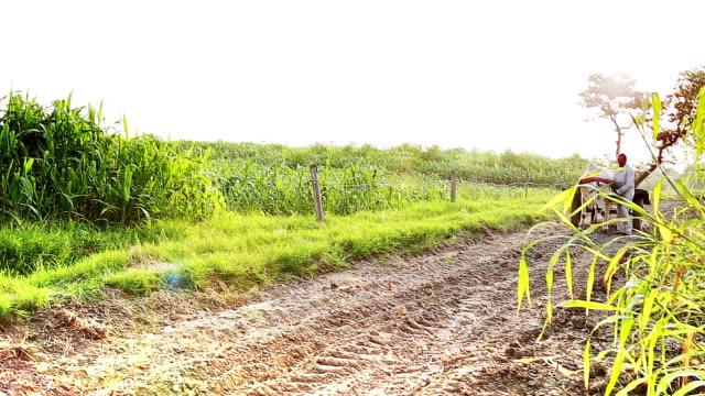 Farmer Riding Oxcart Near Green field in Rural India video