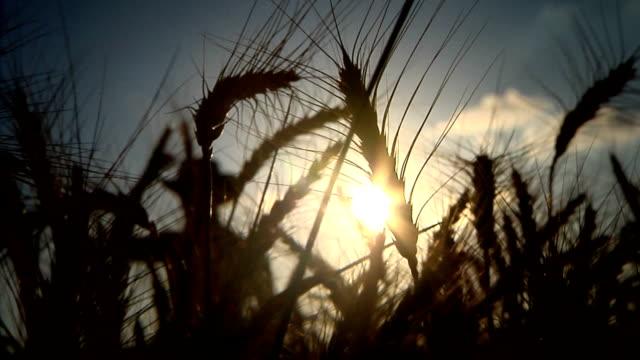 farmer silhouette front video