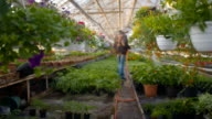 Farmer Spraying Water On Plants In Greenhouse video