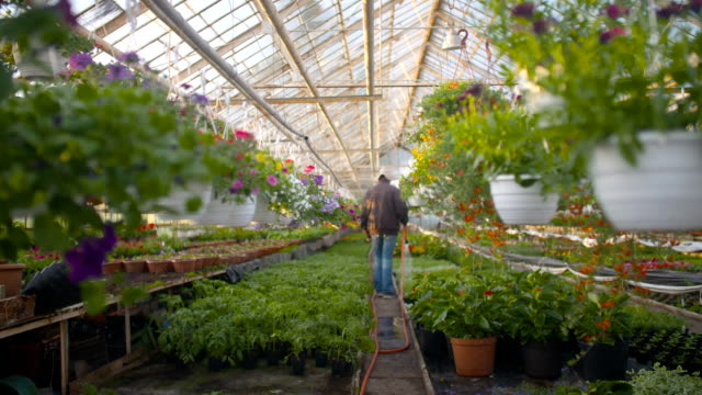 Farmer Spraying Water On Plants In Greenhouse video