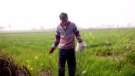 Farmer spreading compost in the wheat field video