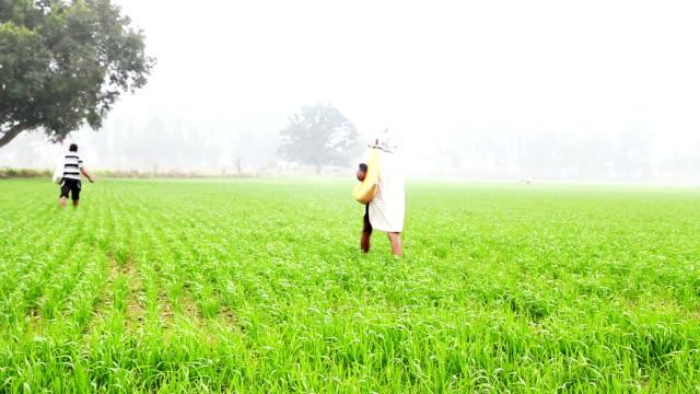 Farmer spreading pesticide in the field video