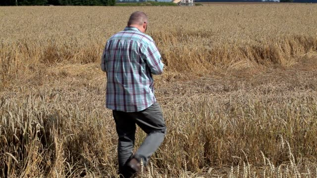 Farmer take pictures on destroyed cereal field video