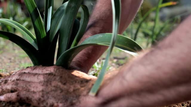 Farmer tends plants in vegtable garden video