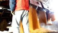Farmer unloading corn in a silo, slow motion video