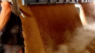 Farmer unloading wheat in a silo video