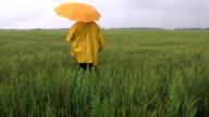 Farmer waiting for the rain in a wheat field video