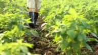 farmer walking in cultivated field video