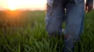 Farmer walking in green wheat field examining crops. video