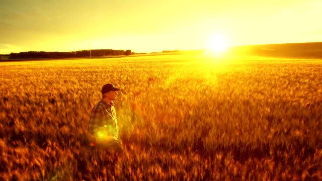 Farmer walking in his crop field. video